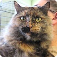 Adopt A Pet :: Myra - Reeds Spring, MO