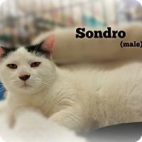 Adopt A Pet :: Sondro - Springfield, PA