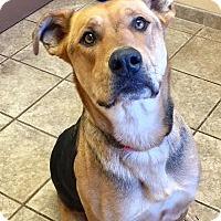 Adopt A Pet :: Monica 5570 - Joplin, MO
