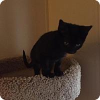 Adopt A Pet :: Bronte - Glendale, AZ