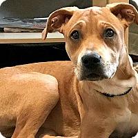 Adopt A Pet :: Emma Watson - Durham, NC