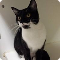 Adopt A Pet :: Batgirl 109938 - Joplin, MO