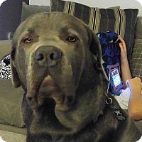 Adopt A Pet :: Mossimo - Virginia Beach, VA