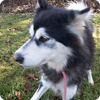 Adopt A Pet :: Erina from Korea - Augusta County, VA