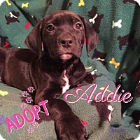 Adopt A Pet :: Addie - Foristell, MO