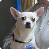 Adopt A Pet :: Benji - Jackson, MO