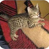 Adopt A Pet :: Tania - Davis, CA