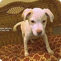 Adopt A Pet :: Ralphie - Gadsden, AL