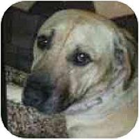 Adopt A Pet :: Ajax - Los Alamitos, CA