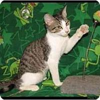 Adopt A Pet :: Dupree - Orlando, FL