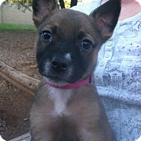 Adopt A Pet :: Margo - Phoenix, AZ