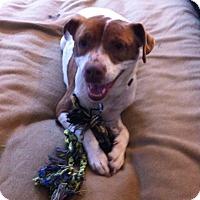 Adopt A Pet :: Fiona - Bardonia, NY