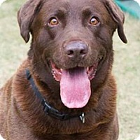 Adopt A Pet :: Cody - Huntsville, AL