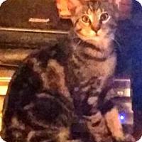 Adopt A Pet :: Paul - Lebanon, PA