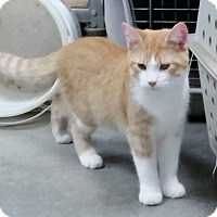 Adopt A Pet :: Chip - Florence, IN