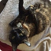 Adopt A Pet :: Snickers - Las Vegas, NV