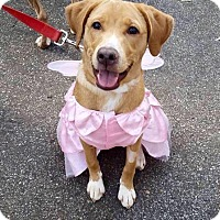 Adopt A Pet :: Millie - Charlotte, NC