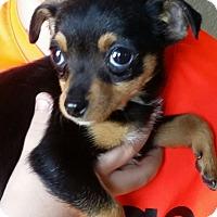 Adopt A Pet :: DANICA - Gustine, CA