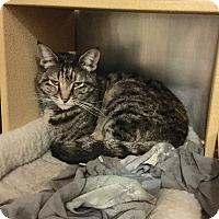 Adopt A Pet :: Franny - Colmar, PA