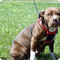 Adopt A Pet :: Tristin - Shelby, MI