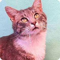 Adopt A Pet :: Dusty Roads - Colorado Springs, CO
