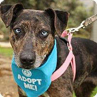 Adopt A Pet :: Molly Cat - Pacific Grove, CA
