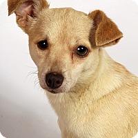 Adopt A Pet :: Geraldine Chimix - St. Louis, MO