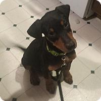 Adopt A Pet :: Donald - New Oxford, PA