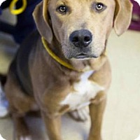 Adopt A Pet :: Country - Chester Springs, PA