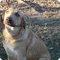 Adopt A Pet :: Ziggy - Conway, AR