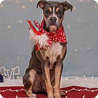 Adopt A Pet :: Emma - Flint, MI