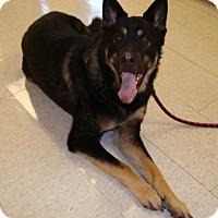 Adopt A Pet :: Sarge - Rosalia, KS