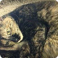 Adopt A Pet :: Ruthie - Sarasota, FL