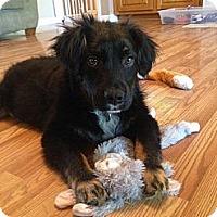 Adopt A Pet :: Jodie - Homewood, AL