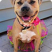 Adopt A Pet :: Betty - San Jose, CA