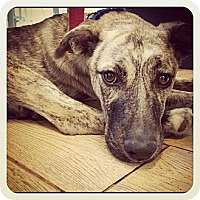 Adopt A Pet :: Riley - Los Angeles, CA