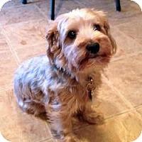 Adopt A Pet :: Tank - Green Bay, WI