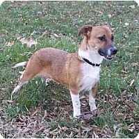 Adopt A Pet :: Brody - Mocksville, NC
