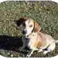 Adopt A Pet :: Rosie - Adamsville, TN
