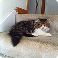 Adopt A Pet :: Ricky - batlett, IL
