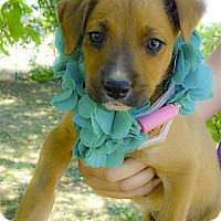 Adopt A Pet :: 7 puppies so cute - Sacramento, CA