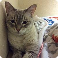 Adopt A Pet :: Calvin - Fountain Hills, AZ