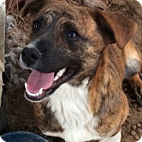 Adopt A Pet :: Kayla in CT - East Hartford, CT