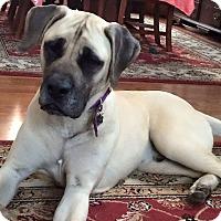 Adopt A Pet :: Guinness - Plainfield, IL