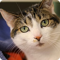 Adopt A Pet :: Elana - Chicago, IL