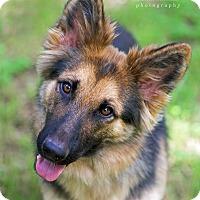 Adopt A Pet :: Margo - Dripping Springs, TX