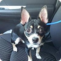 Adopt A Pet :: Jax - ROME, NY