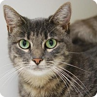 Adopt A Pet :: Merriweather - DFW Metroplex, TX