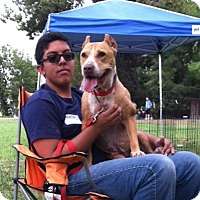 Adopt A Pet :: Perfect Pearl - videos! - Los Angeles, CA