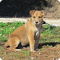 Adopt A Pet :: KNUTE - Hartford, CT